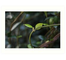 leaves on vine Art Print