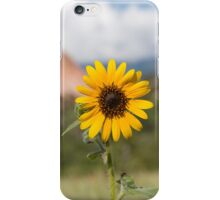 Sunflower in the Garden of the Gods iPhone Case/Skin