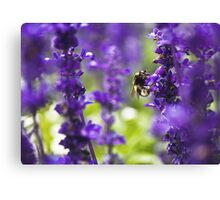 Bumble been in lavender Canvas Print