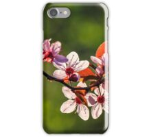 flowers of apple tree on a blur background iPhone Case/Skin