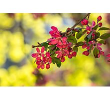 red flowers of apple tree on a grass Photographic Print