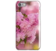 pink flowers of sakura branches on blury background iPhone Case/Skin