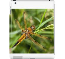 Four Spot Chaser Dragonfly iPad Case/Skin