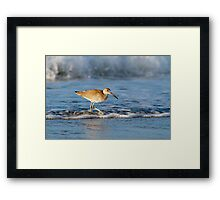 Willet in the Waves Framed Print