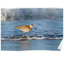 Willet in the Waves Poster