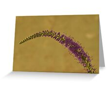Wild Campanula  Greeting Card