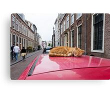 Cat on a red car roof Canvas Print