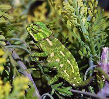 Chameleon by Xandru