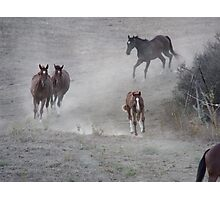Galloping Dust Photographic Print