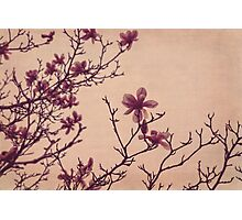 Tree Blossoms 3 Photographic Print