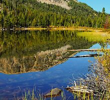 Smith Lake Reflection by lkamansky