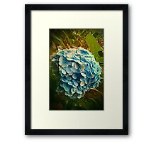 Beauty in the details Framed Print