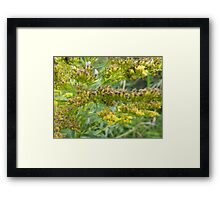 Wilting Gold Framed Print