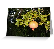 Pomegranate in a Tuscan Garden  Greeting Card