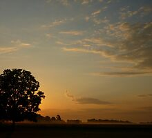 New Day Dawning by WildestArt