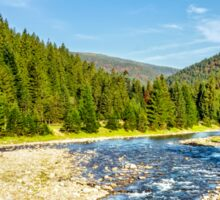 Mountain river among conifer forest Sticker