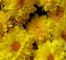 Yellow Mums by WildestArt