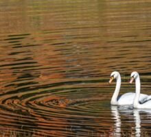 Two swans onthe lake with forest reflection Sticker