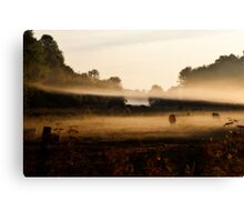 Sunrise on Bush Rd. XV Canvas Print