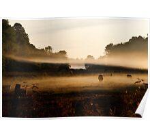 Sunrise on Bush Rd. XV Poster