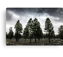 Silver Forest Canvas Print
