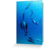The 11th dolphin Greeting Card