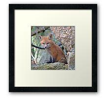 Fox Wildlife Framed Print