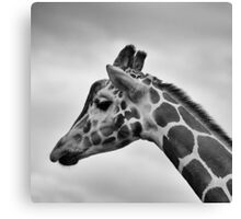 Wildlife Giraffe Canvas Print