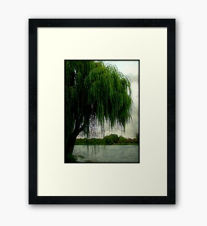My beautiful weeping willow © Framed Print