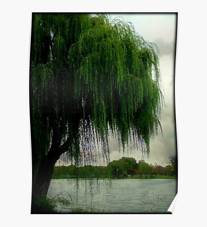My beautiful weeping willow © Poster