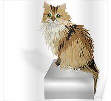 Cute Golden Cat Poster