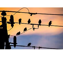 Early Birds Photographic Print