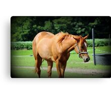 Another Horse Image Canvas Print