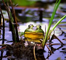 Ribbit by Asoka