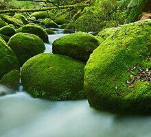 Greenery, Toorongo River, Gippsland, Victoria, Australia by Michael Boniwell