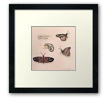 Butterfly Studies-scroll down to view more of my work Framed Print