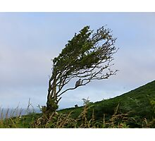 Single pigeon in a windswept tree. Photographic Print