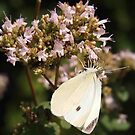 White Cabbage Butterfly  by Linda  Makiej