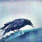 Mr. Bluebird by Priska Wettstein
