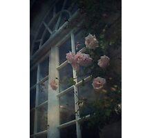 Window Roses Photographic Print