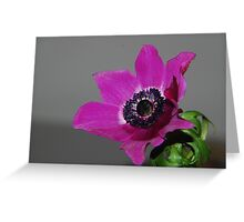 Hot Pink Anemone Greeting Card