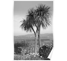 Two palm trees Poster