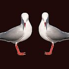 Beautiful Silver Gull, mugs cups and clothes by sunnypicsoz