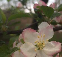 Springtime Blossoms Sticker