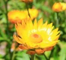 Flowers In The Field Sticker
