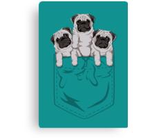 Pocket Pug Canvas Print
