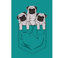 Pocket Pug Photographic Print