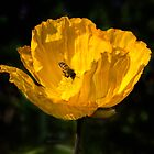 Attracted to Yellow by Clare Colins