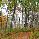 Trail View by Ella Blame