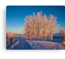 Frozen Poplar Trees I, Northern Ireland Canvas Print